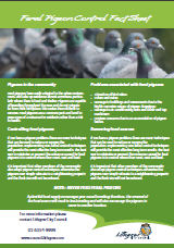 Pigeon control flyer