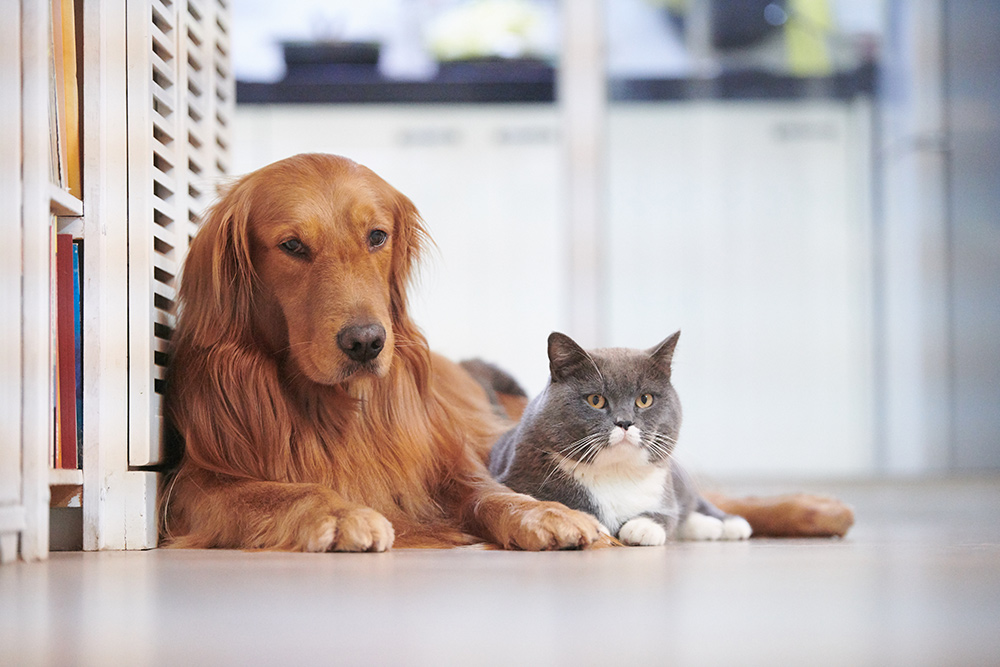 Responsibilities of Dog Owners